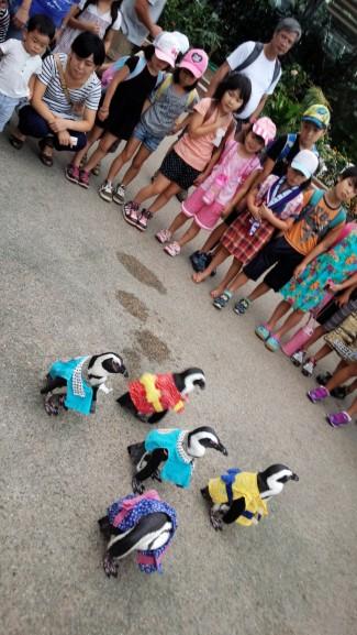 お散歩中のペンギンに遭遇